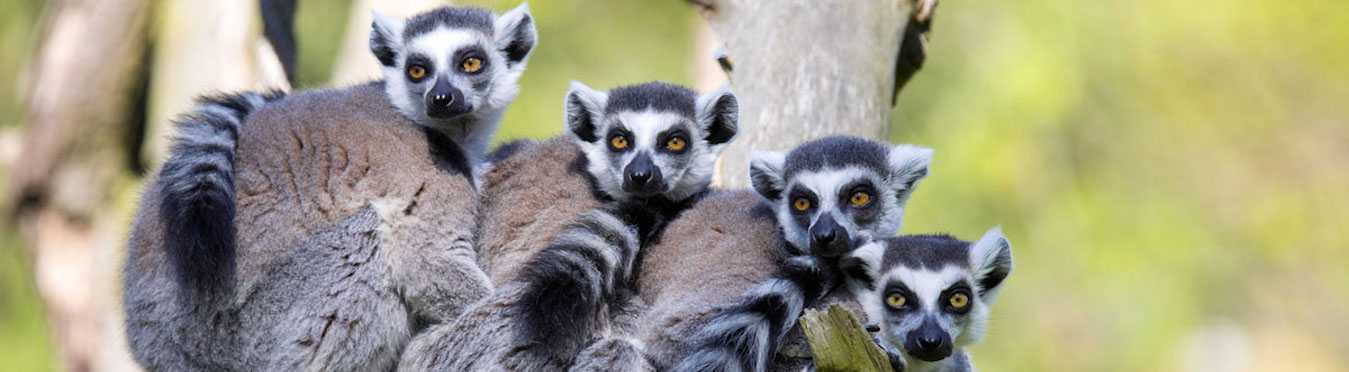Madagascar Wildlife Conservation Adventure