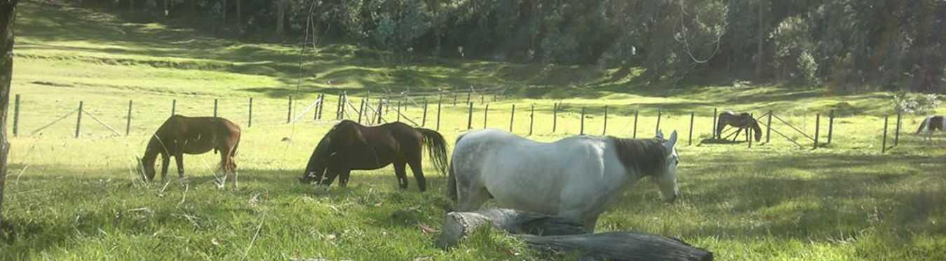 Animal Therapy Program in Quito, Ecuador
