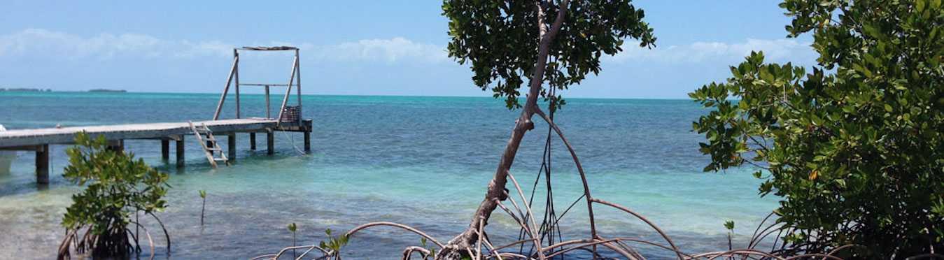 Marine Conservation & Diving in Belize