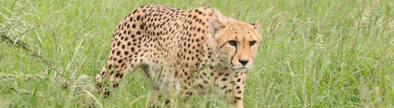 African Predi-Cat Project