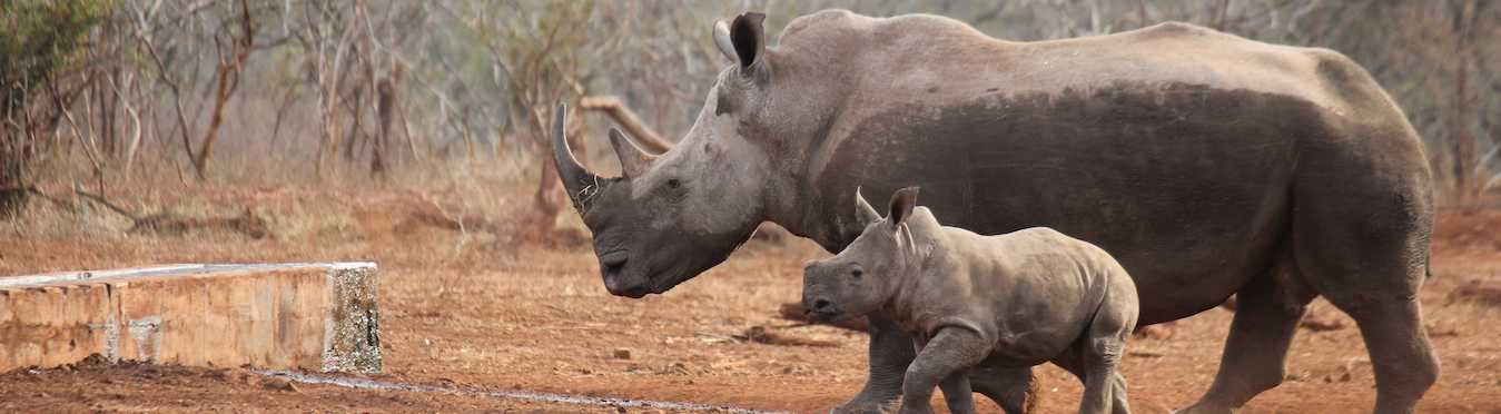 Wildlife Conservation Internship in South Africa