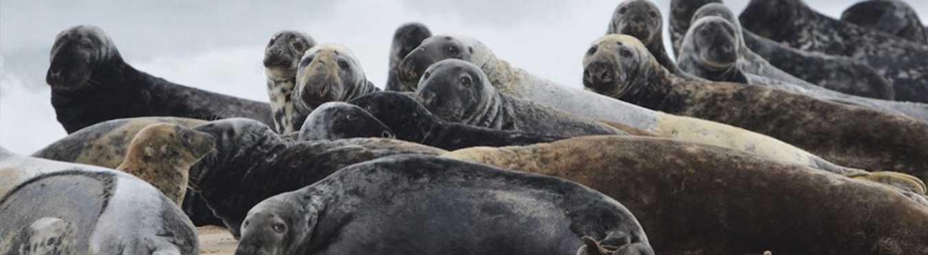 Sable Island's Wild Horses