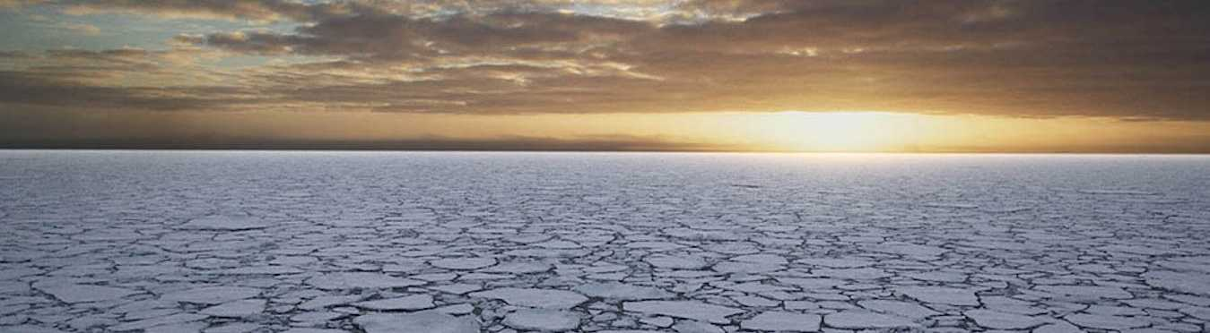 Antarctica Wildlife Expedition