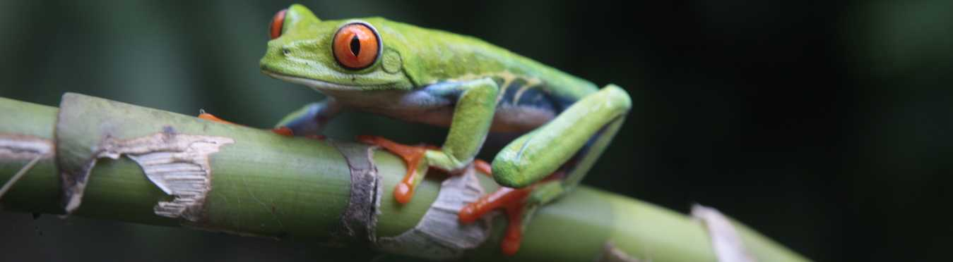 Nicaragua Wildlife Adventure