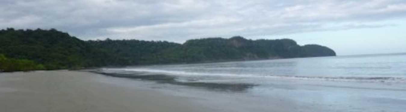 Protect Sea Turtles in Costa Rica