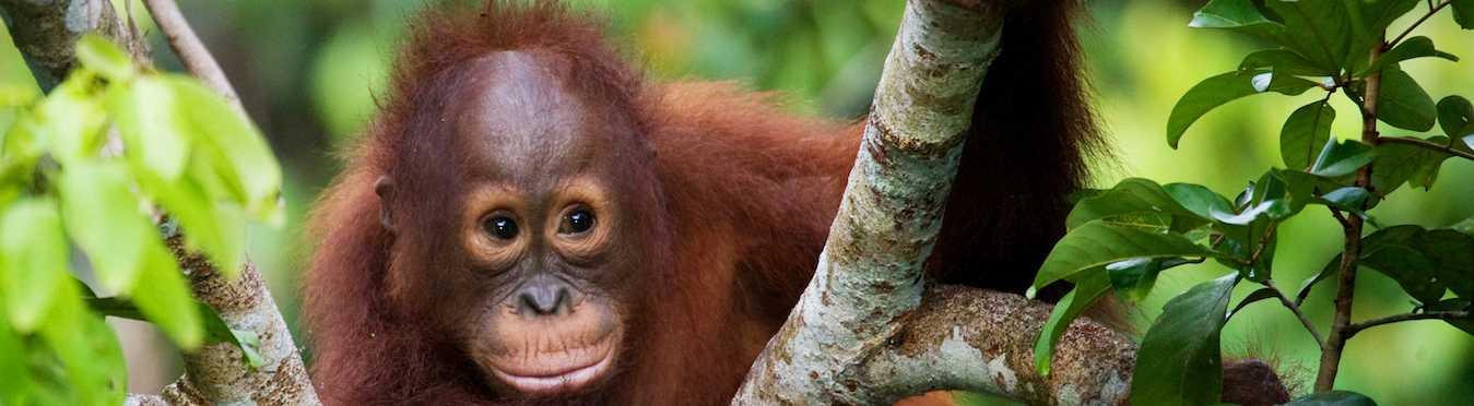 Intrepid Borneo Family Adventure