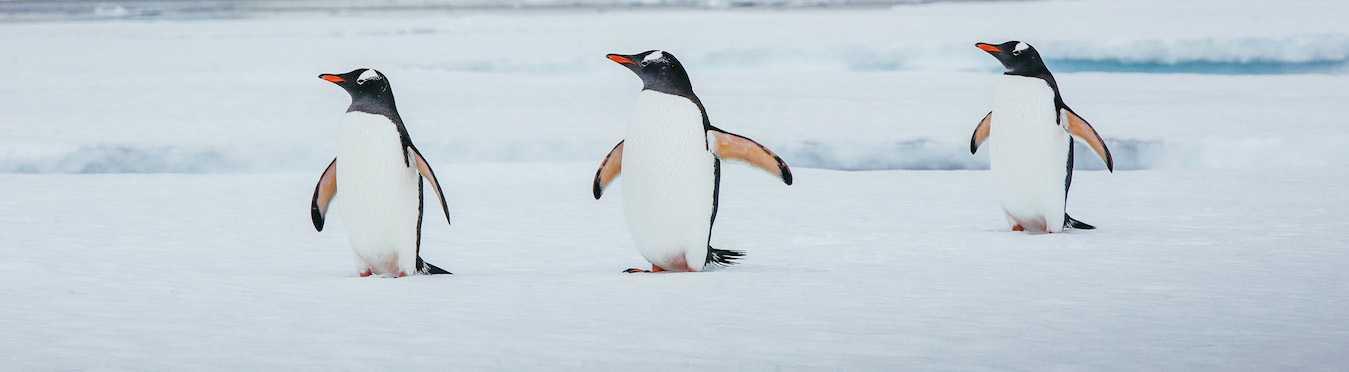 Epic Antarctica: Crossing the Antarctic Circle via Falklands and South Georgia