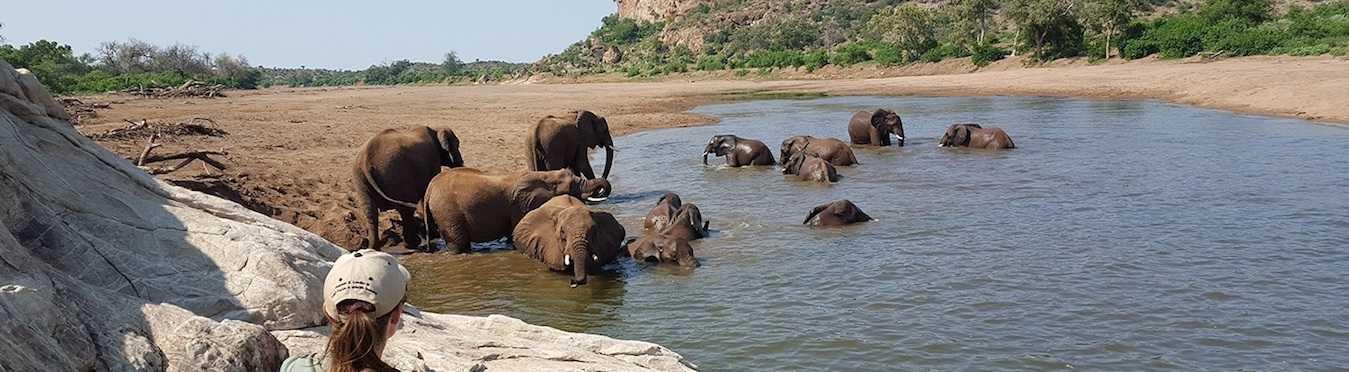 Safari Field Guide Course