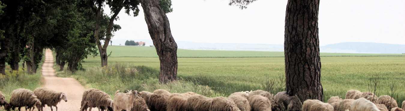 Culinary and Shepherding Cultural program in Puglia, Italy