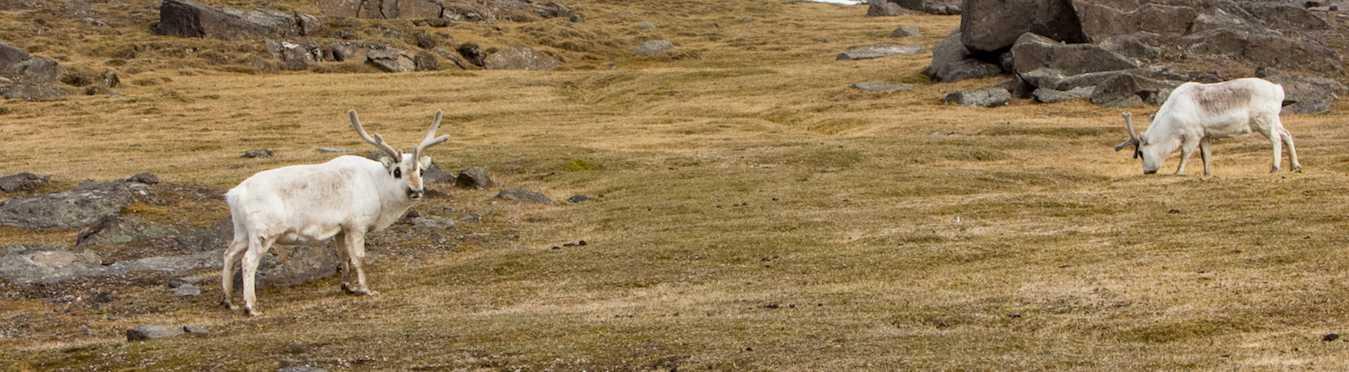 Introduction to Spitsbergen: Polar Bear Safari