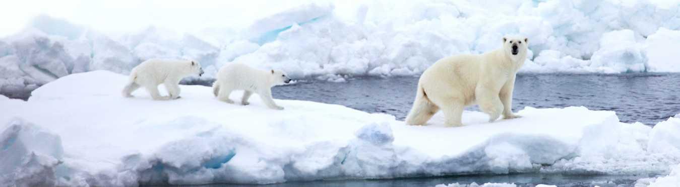 Spitsbergen In Depth: Big Islands, Big Adventure