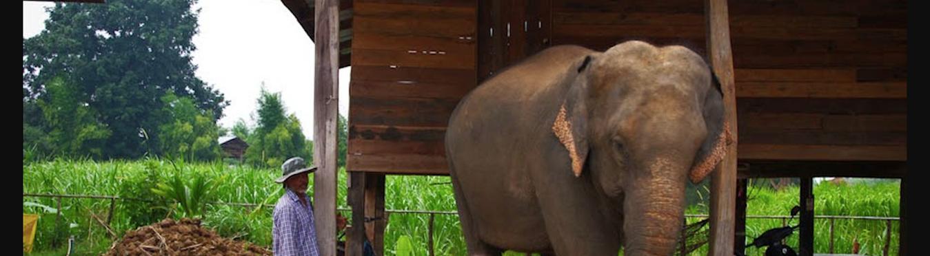 Elephant Welfare and Community Development in Thailand