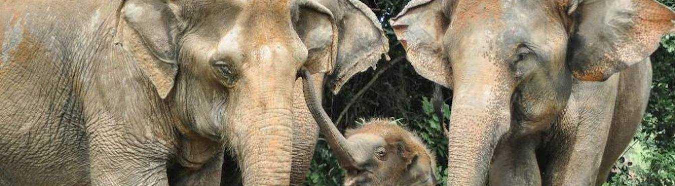 Wildlife Sanctuary Volunteering in Thailand