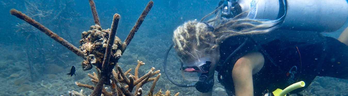 Thailand Marine Conservation on the Island of Koh Tao