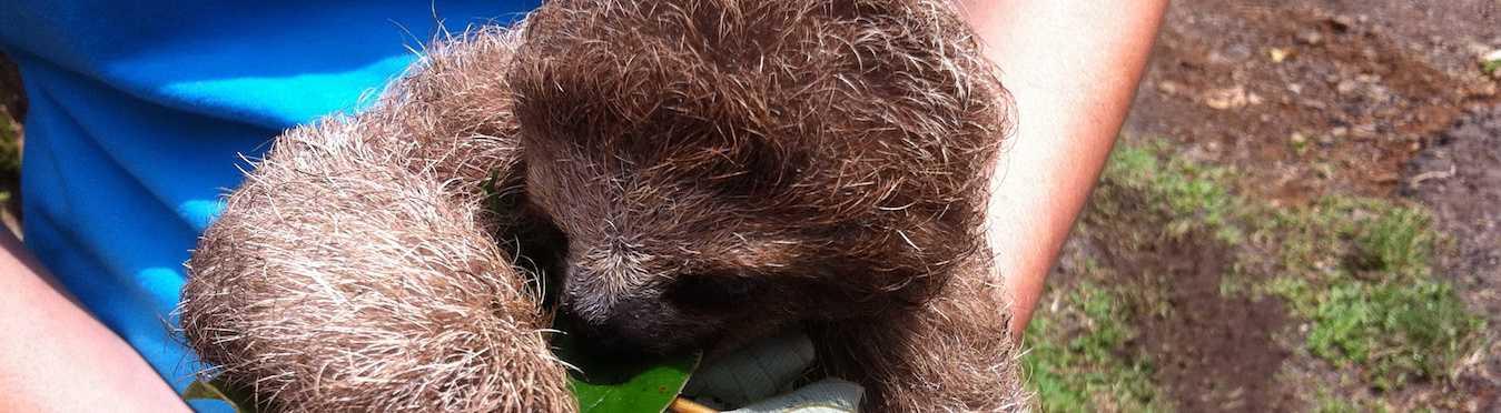 Wildlife Conservation in Costa Rica