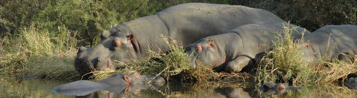 South Africa Wildlife Research