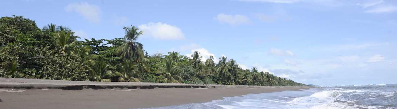 Costa Rica Sea Turtle Conservation