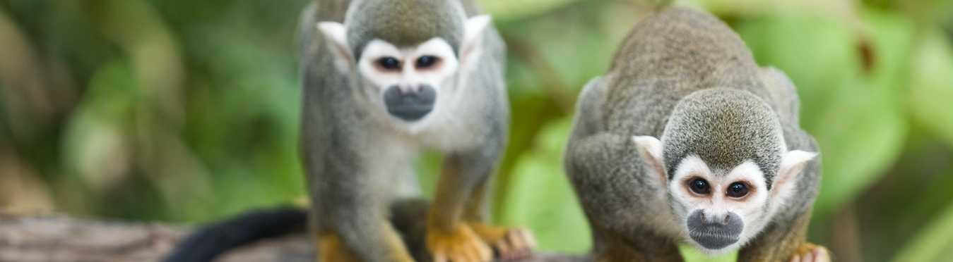 Living Local Ecuador – Amazon Jungle
