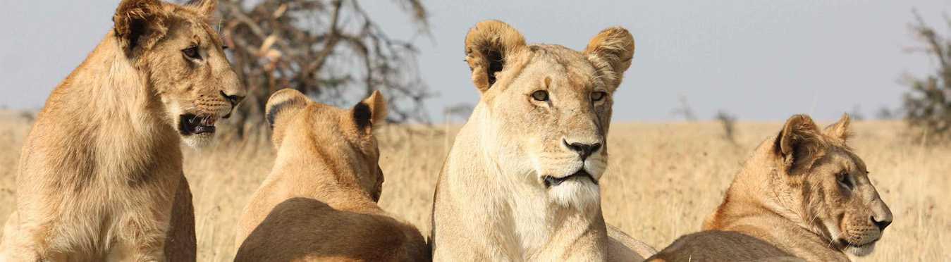 Uganda's Wildlife & Gorillas Adventure