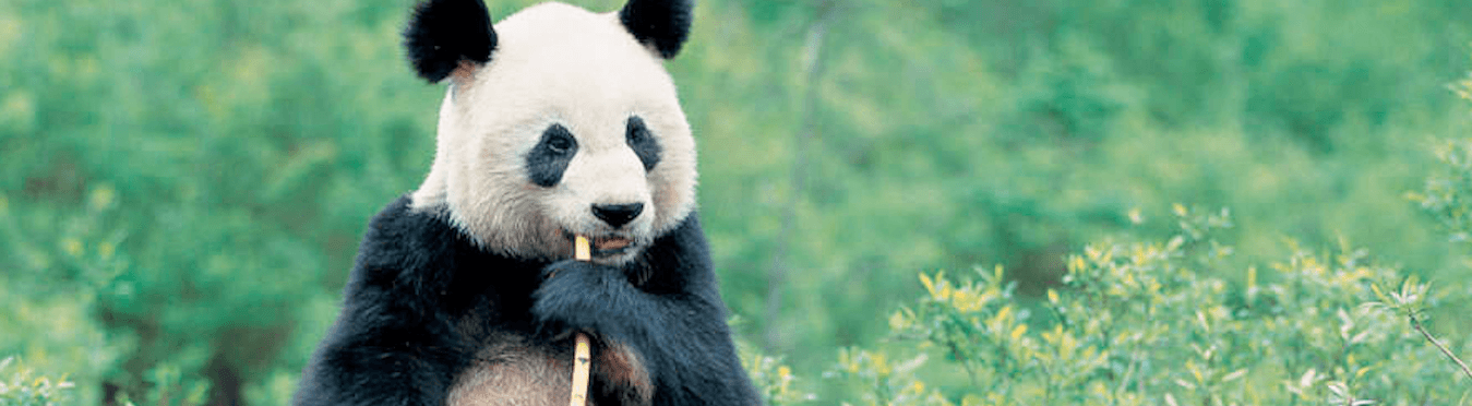 The Wild Side of China