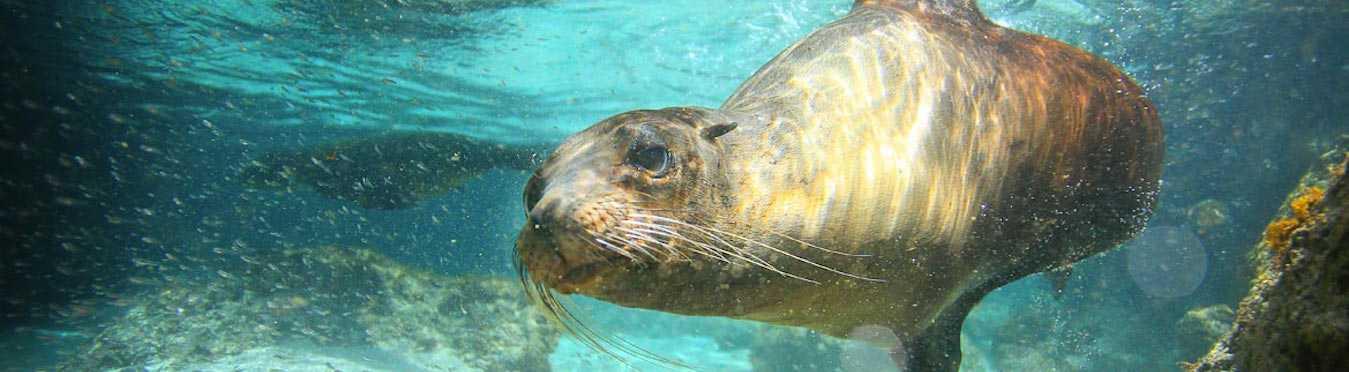 Galapagos Wildlife Adventure Cruise
