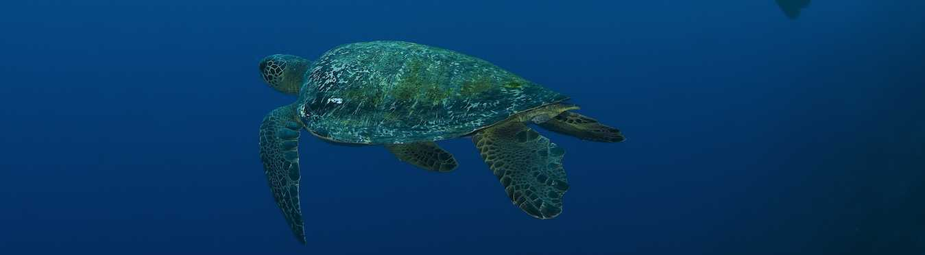 Cocos Island Shark & Sea Turtle Research Trip