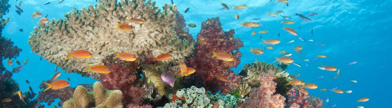 Marine Conservation Exploration in Fiji and Thailand