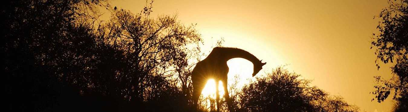 Botswana Culture & Wildlife Safari