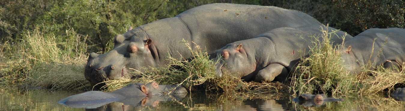 Wildlife Awareness South Africa for Teens