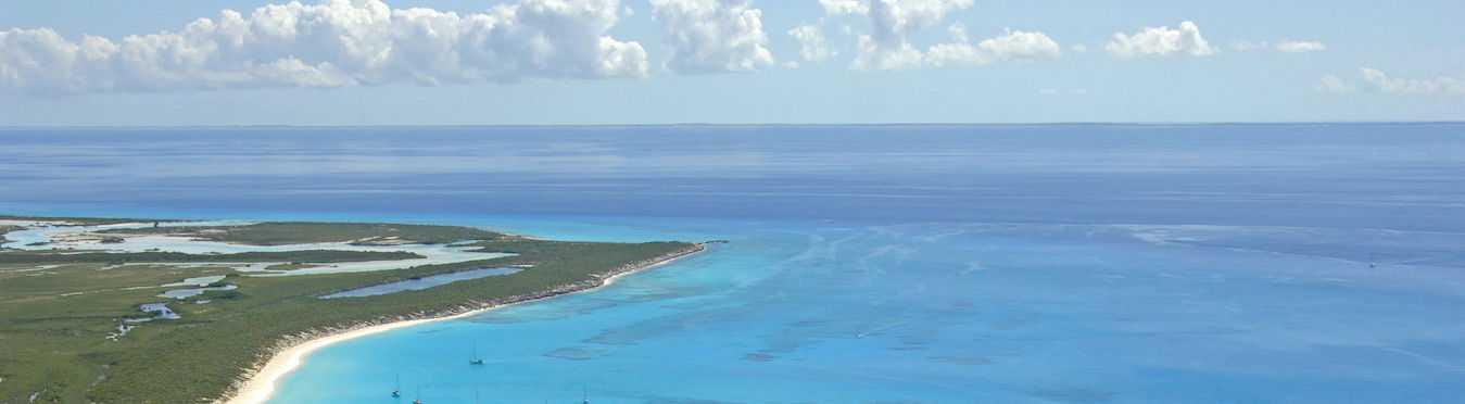 Coastal Bird Conservation in the Bahamas
