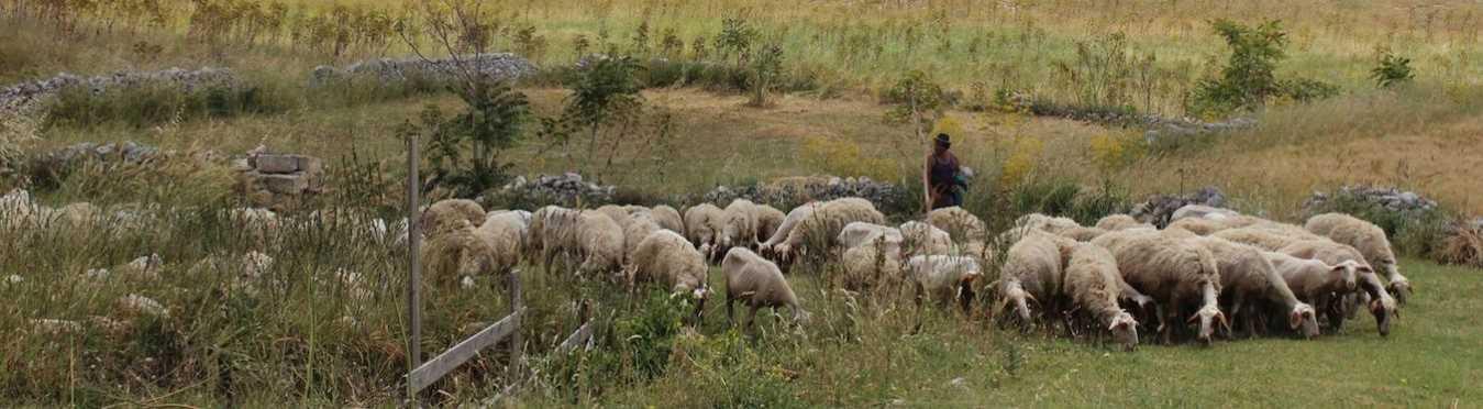 Culinary & Shepherding Workshop in Puglia, Italy