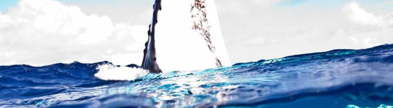 Tonga Whale Encounters