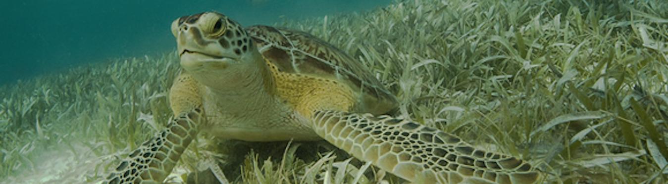 Belize Ocean Wildlife Tour
