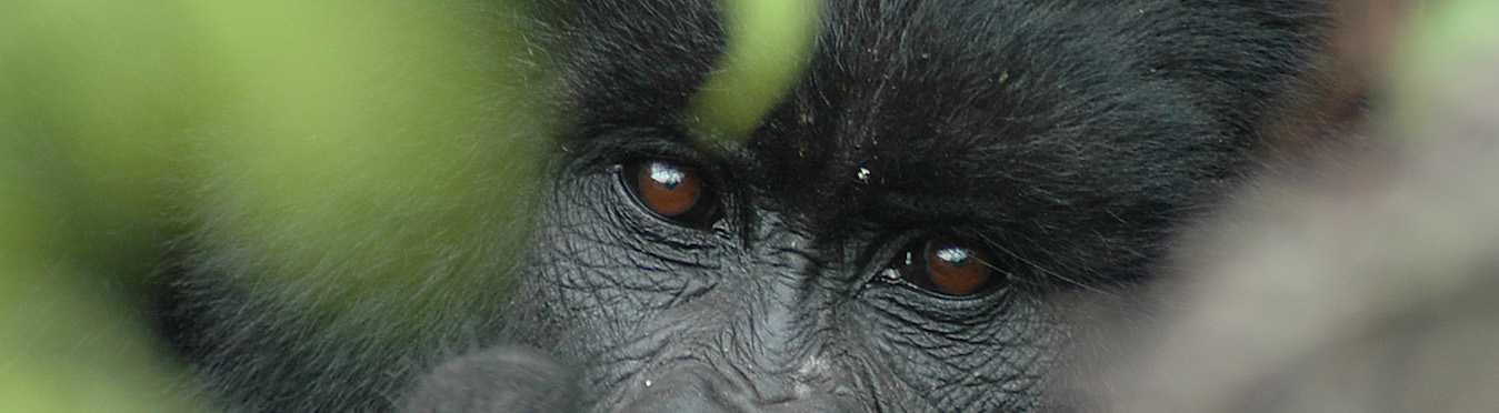 Gorilla Trekking and Relaxation in Lake Bunyonyi