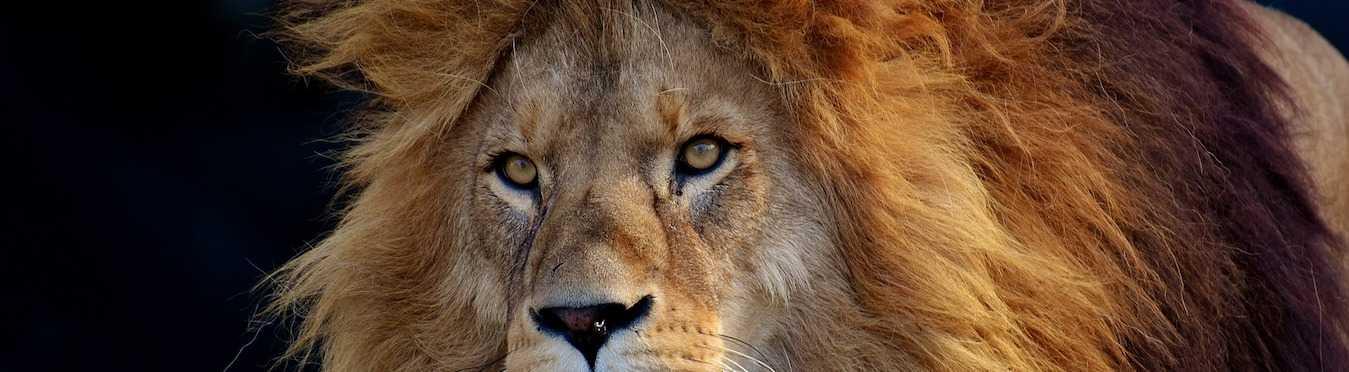 Kevin Richardson Wildlife Volunteer Project