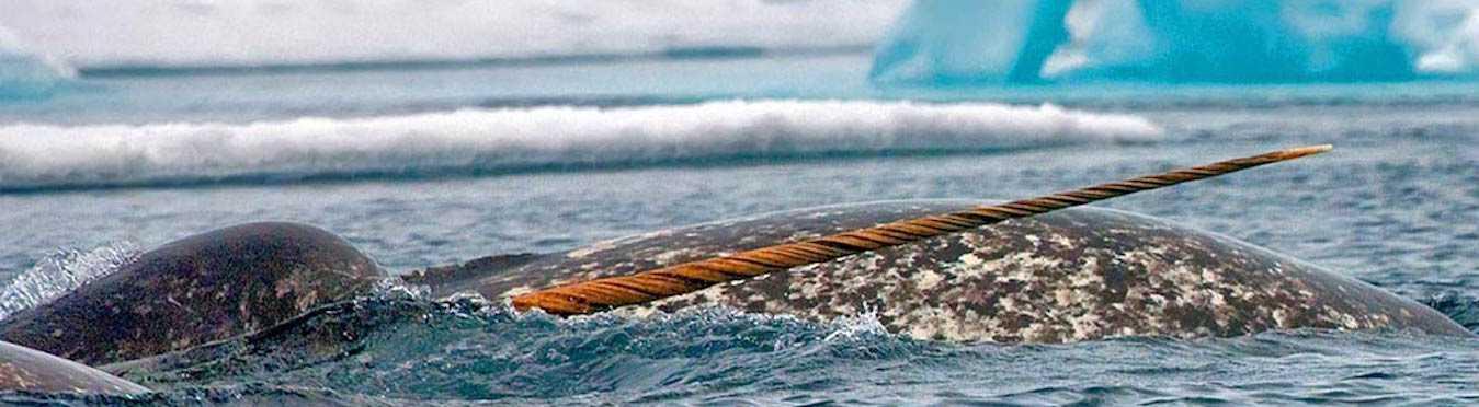 Arctic Floe Edge Safari