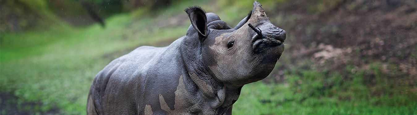 Rhino Sanctuary Volunteer Project