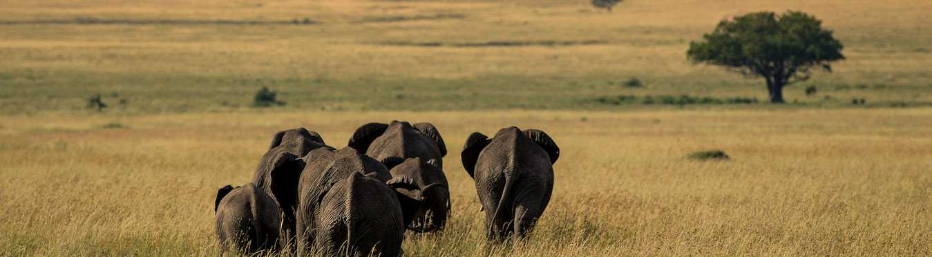 African Safari for a Good Cause