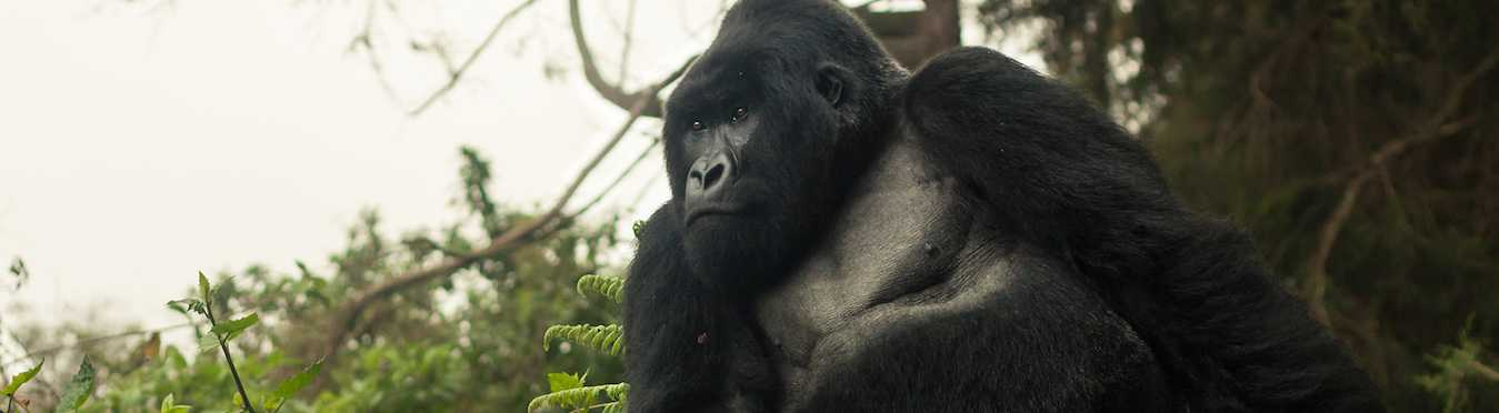 Epic Gorilla & Wildlife Safari