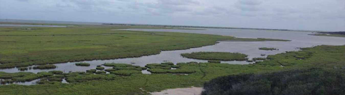 Protecting Coastal Habitats & Whooping Cranes in Texas